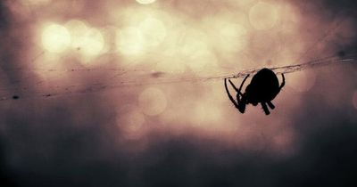 Nie wieder Spinnen in der Wohnung!