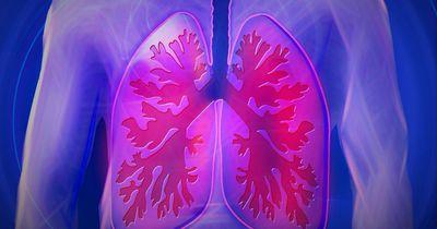 Neue Entdeckung: Unsere Lunge hat eine weitere Funktion